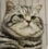 angrycat121