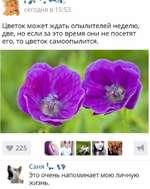 < 0' - сегодня в 15:53 Цветок может ждать опылителей неделю, две, но если за это время они не посетят его, то цветок самоопылится. * 225 Саня Это очень напоминает мою личную жизнь.